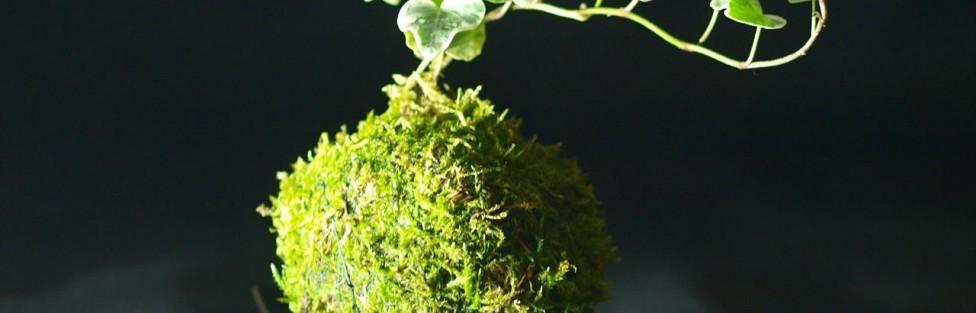 Idée déco: Le kokedama, une sphère de vie japonaise